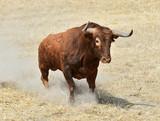 toro español