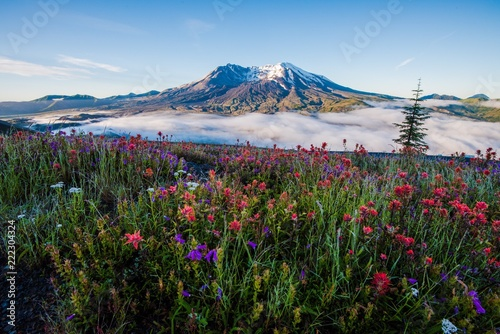 Mount St Helens in Summer