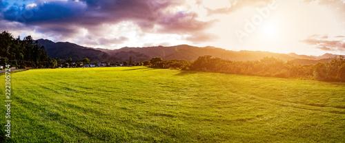 Foto Murales New Zealand green field sunrise