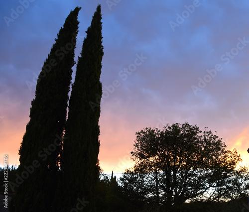 Dramatischer Sonnenuntergangshimmel hinter Zypressen und einer Baumkrone - 222308706