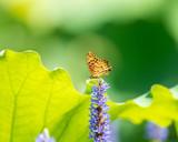 butterfly settled on the flower