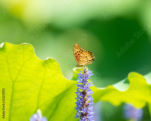 butterfly settled on the flower - 222311515