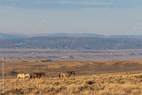 Poster Wild horses in the Colorado High Desert