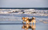 Two Cute Dogs Walking on a Beach