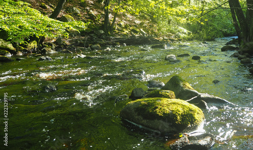 Foto Murales natural river creek in sweden