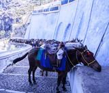 Mules saddled awaiting tourists