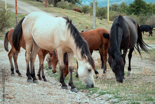 group of horses glazing near the road