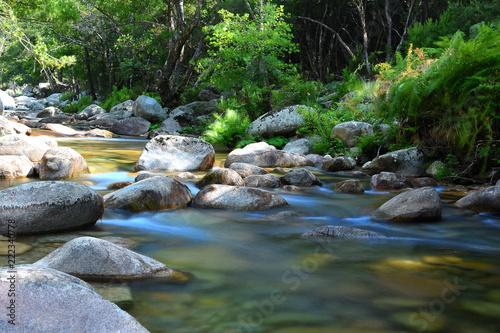 corse : rivière dans les gorges de spélunca - 222340778
