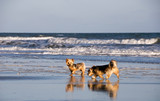 Two Adorable Dogs Playing on a Beach