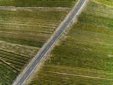 Landstraße in den Weinbergen - 222354397