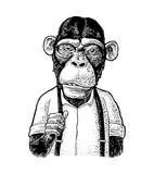 Monkey businessman in the shirt and suspender. Vintage black engraving - 222365351