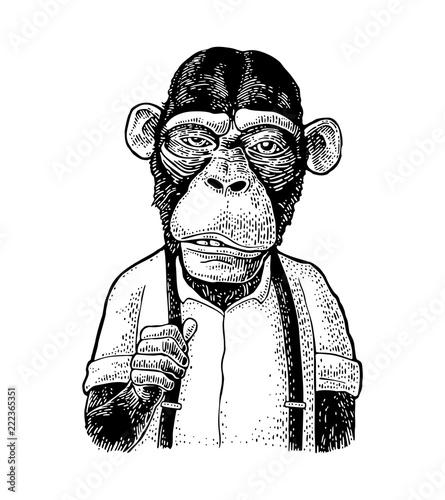 Fototapeta Monkey businessman in the shirt and suspender. Vintage black engraving