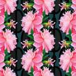 peony flower - 222388336