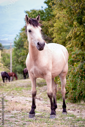 one white horse standing outdoor full size portrait, vertical