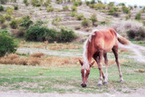 one foal eating grass outdoor full size portrait - 222401105