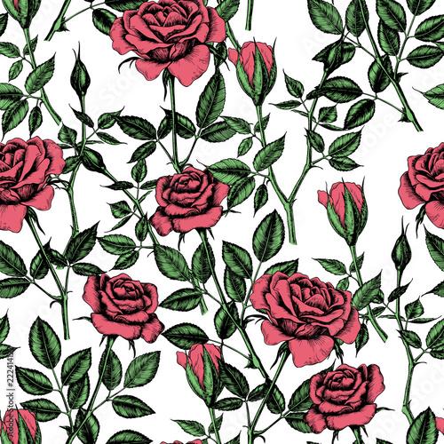 Fototapeta Seamless pattern with hand drawn roses.