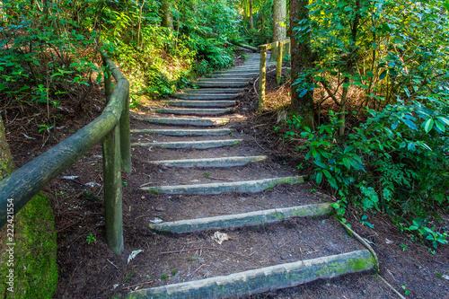Foto Murales Walking trail around the Blue Lake - Rotorua