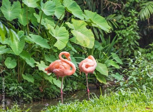 Dwa różowa flaming pozycja w woda parku