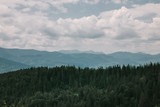 cloudly summer landscape of Carpathian mountains, pine forest and sky. Ukraine