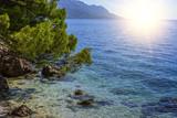 Pine on the shore of the blue sea. Croatia.