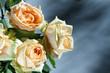 Pastel pink roses on grey. - 222458720