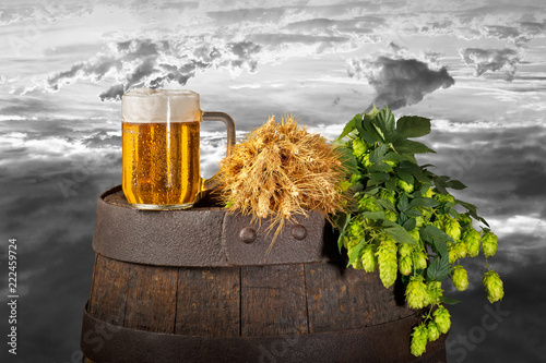 Fototapeta Still life with beer,hops and wheat