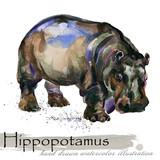 hippopotamus hand drawn watercolor illustration - 222473597
