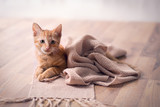 Young cat resting on blanket - 222475126