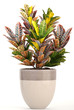 Leinwandbild Motiv Croton in pot. Exotic plants
