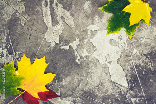 Natural maple fall leaves frame on gray stone background, retro toned
