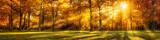 Wald Panorama im Herbst als Hintergrund