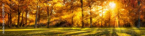 Lasowa panorama w jesieni jako tło