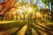 Leinwanddruck Bild - Bunter Herbstwald im Sonnenlicht