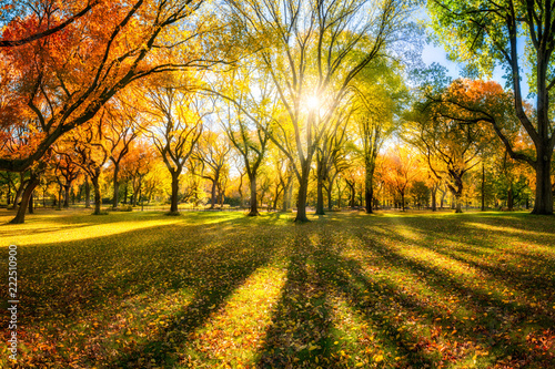 Leinwandbild Motiv Bunter Herbstwald im Sonnenlicht