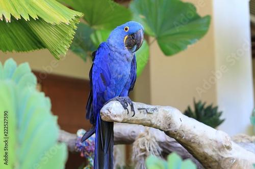 Fototapeta Parrot