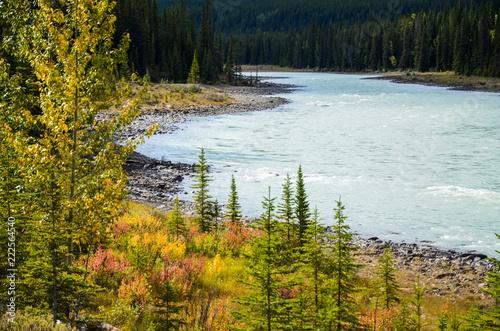 秋のカナディアンロッキー アサバスカ川 ーアイスフィールド・パークウェイにて(カナダ・アルバータ州)