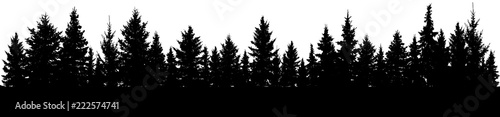 Fir trees silhouette. Forest, vector - 222574741