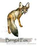 fox hand drawn watercolor illustration  - 222583965