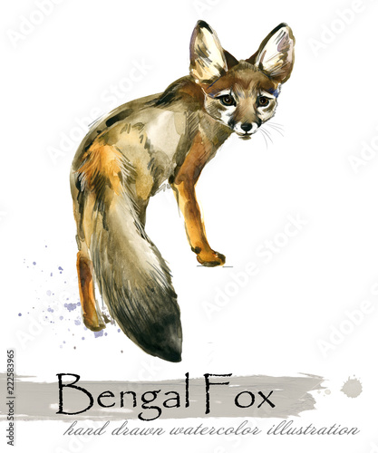 Fototapeta fox hand drawn watercolor illustration