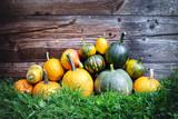 Different kind of pumpkins in garden grass near old wooden wall. Halloween background - 222615359