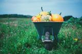 Different kind of pumpkins in wheelbarrow on garden. Autumn and harvest concept. Halloween background - 222615395