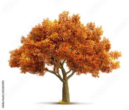 autumn maple tree isolated © andreusK