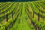 Vineyards in California, USA - 222627559
