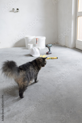 Cute cat in a under construction room - 222635984