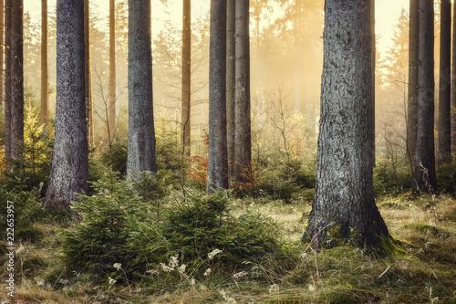 Goldenes Licht im Wald