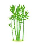 Light cartoon bamboo grove. Bamboo cartoon forest. Vector illustration