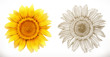 Sunflower. 3d realism and engraving styles. Vector illustration - 222662341