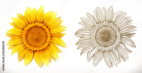 Naklejka Sunflower. 3d realism and engraving styles. Vector illustration