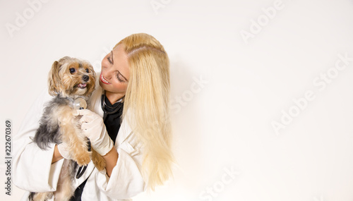 Fototapeta Friendly female veterinarian holding cute Yorkshire dog and smiling, white clean background , copy space
