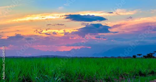 sunset over green field - 222684509